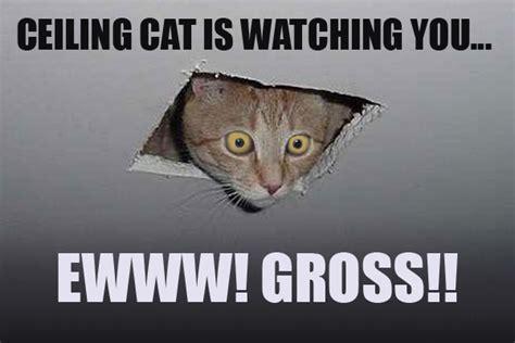 Its Friday Gross Meme - its friday gross meme 100 images gross tgif meme gifs