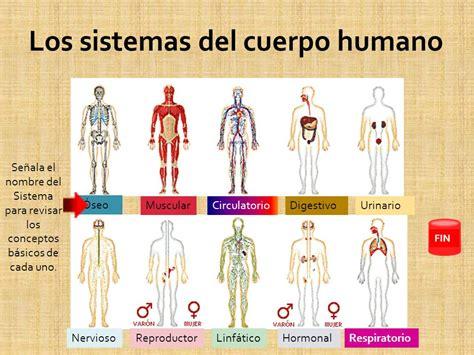 imagenes de los nombres del cuerpo humano en ingles conocimiento del cuerpo ppt descargar