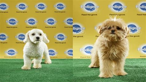 puppy bowl mvp central florida puppies named puppy bowl mvps