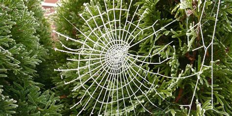 why are spider webs a popular christmas tree decoration best 28 why are spider webs a popular decoration in poland best 28 why are spider