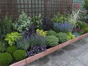 how to create an evergreen border jersey plants direct blog