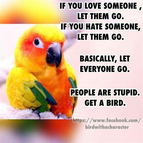 Bird Meme - das ist wahr ich will auch einen parrot humor