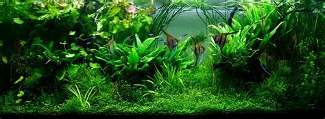 Aquascape Style by 7 Aquascaping Styles For Aquariums The Aquarium Guide