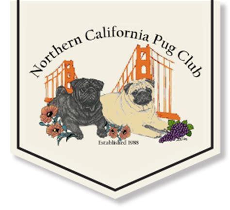 pug breeders northern california northern california pug club northern california pug owners