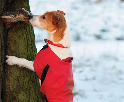 barking up the wrong tree a bluff point barking up the wrong tree part 3 canine chronicle