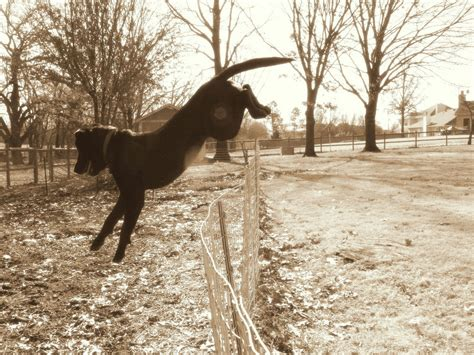 how to keep dog from jumping fence using a dog fence with a privacy fence
