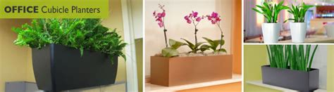cubicle plants office cubicle planters window boxes wholesale
