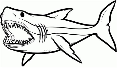 printable coloring pages of sharks clipart best