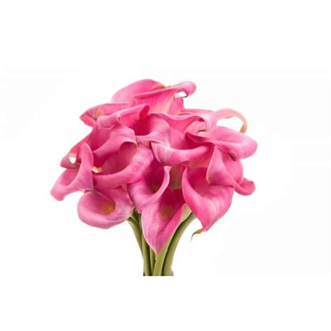 types of calla lilies pink mini calla lilies calla lilies types of flowers