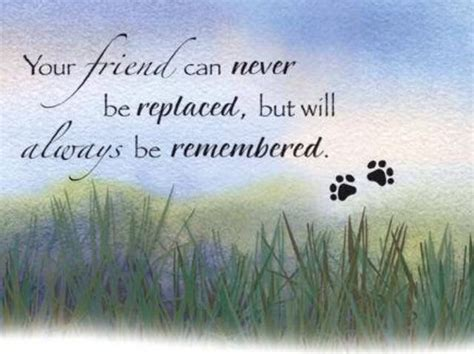comforting quotes about death of a dog 1000 pet sympathy quotes on pinterest pet remembrance