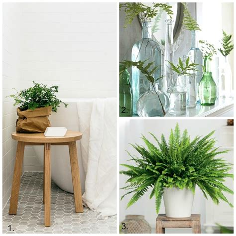 plants to keep in bathroom decorating with ferns diy decorator