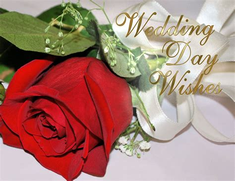 Wedding Wishes by Best Greetings Free Anniversary Greeting Cards Wedding