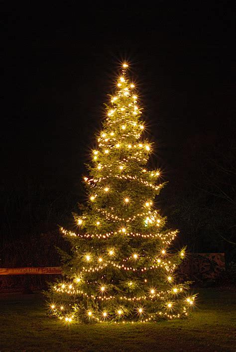 der weihnachtsbaum foto bild natur nadelb 228 ume b 228 ume