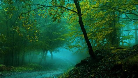 wallpaper spring forest pathway fog  nature