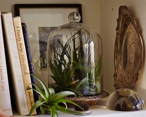 air plants bathroom gardening 101 how to water an air plant gardenista