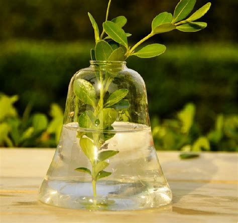Plants In Water Vase by