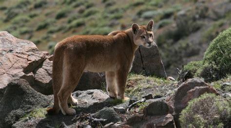 flora y fauna de la patagonia chilena reforestemos patagonia animales de la patagonia primera parte daytours4u