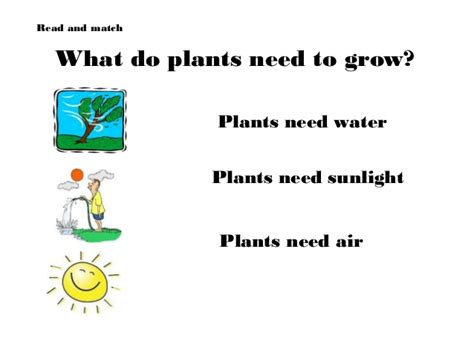 plants that need sunlight plants powerpoint and interactive activities