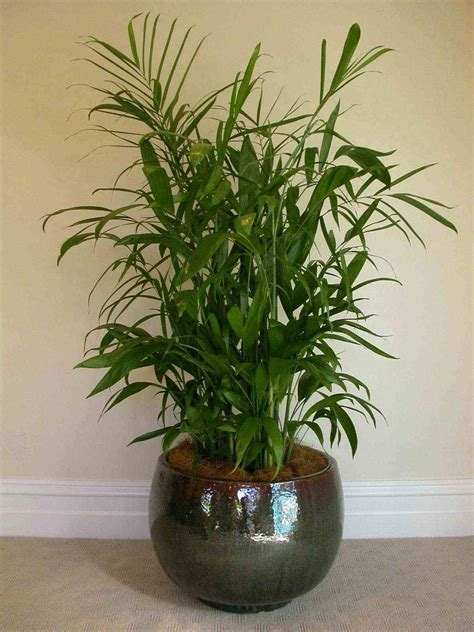 inside plants non toxic house plants for better iaq living room