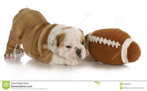 playful puppy playful puppy stock photo image 22000650
