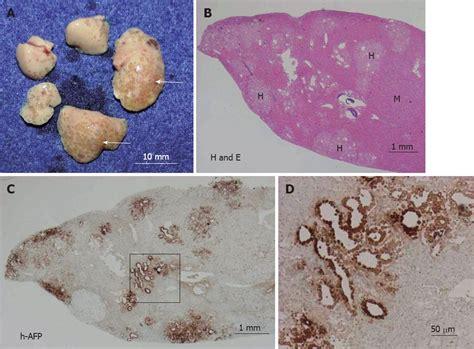 A Novel Animal Model For In Vivo Study Of Liver Cancer