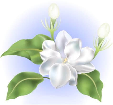 sampaguita flower | this sampaguita flower artwork is a