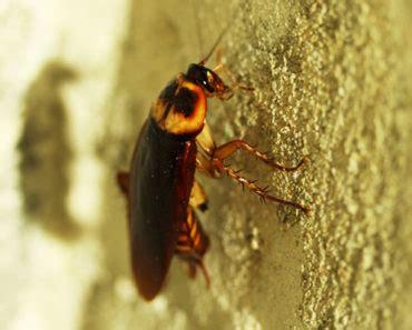 truth   boric acid  ants treatment