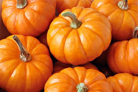 pumpkin cuisine and cooking ideas the dish by restaurant