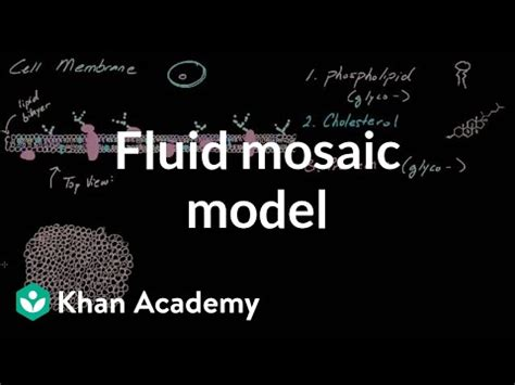 cell membrane overview  fluid mosaic model video