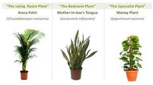 Best Plants For Office With No Windows Ideas Beating Hong Kong S Bad Air The Best Ways To Defend Your Lungs From Air Pollution Post