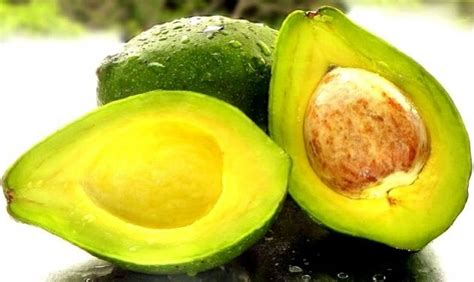 Jual Bibit Alpukat Bogor jual bibit buah alpukat miki baru aneka bibit tanaman