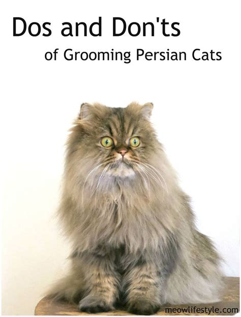 8 Tips On Grooming Your Cat by 17 Images About Cat Grooming On Cat