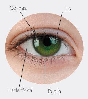 resultado de imagen de partes del ojo externo | to fanfics