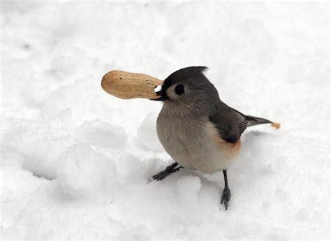 diy how to make suet winter bird feeders beautiful