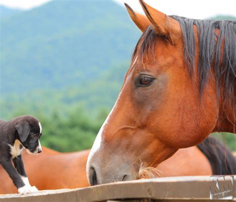 puppies and horses feeding puppies to horses 1 by kurtywompus on deviantart
