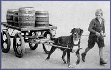 history of rottweilers historic photographs of rottweilers dating back 1907 historic rottweiler pictures