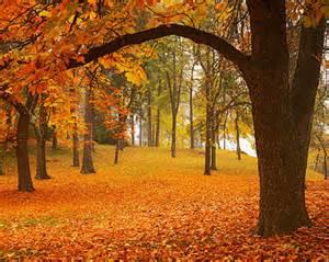 autumn wall murals fall forest scene wallpaper autumn leaves wall mural moonwallstickers com