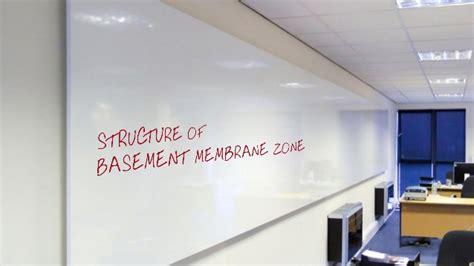 zone basement the biology of the basement membrane zone