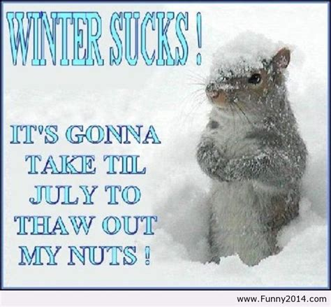 cold weather funny on pinterest hate winter laughter pinterest
