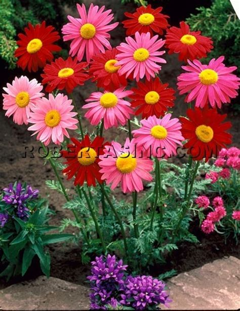 image detail for false gerber painted daisy 6 pc full