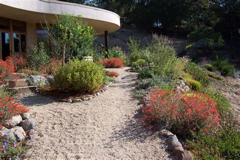 California Natives Plants Wild Willow Landscape Design California Landscaping