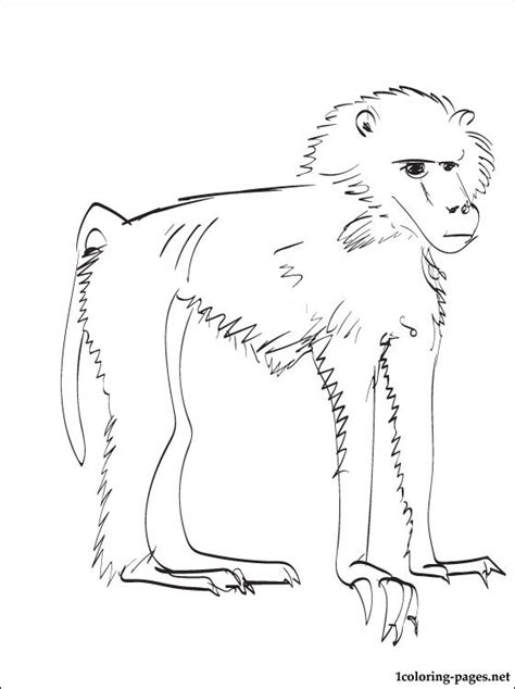 baboon coloring page coloring pages