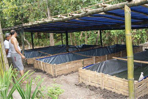 Lokasi Budidaya Lele Dan memilih lokasi ternak ikan minadarat produk ikan air tawar