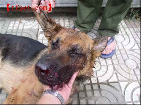 puppy beaten exploitaion cruelty 43 s best friend not for everyone photo