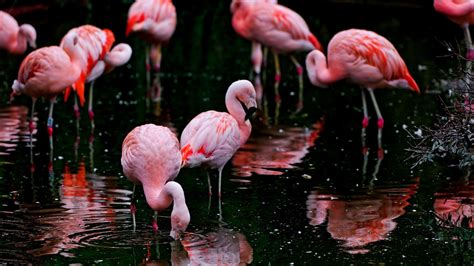 flamingo wallpaper buy flamingo wallpapers images photos pictures backgrounds