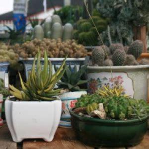 bisnis kaktus  bisnis  depan rmolbengkulucom