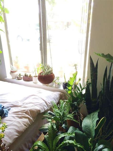 best bedroom plants 194 best images about bedroom plants on pinterest