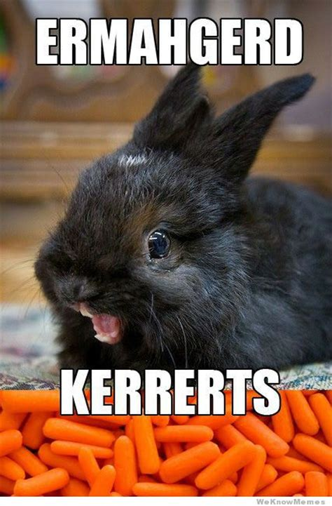 Funny Rabbit Memes - funny all animals memes photographs funny and cute animals
