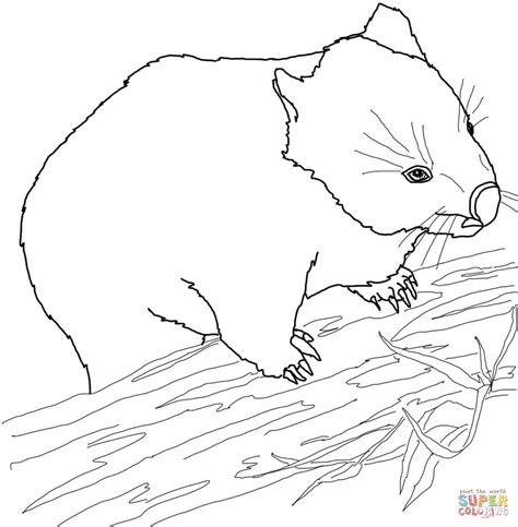 Australian Wombat Coloring Page Free Printable Coloring Wombat Coloring Page