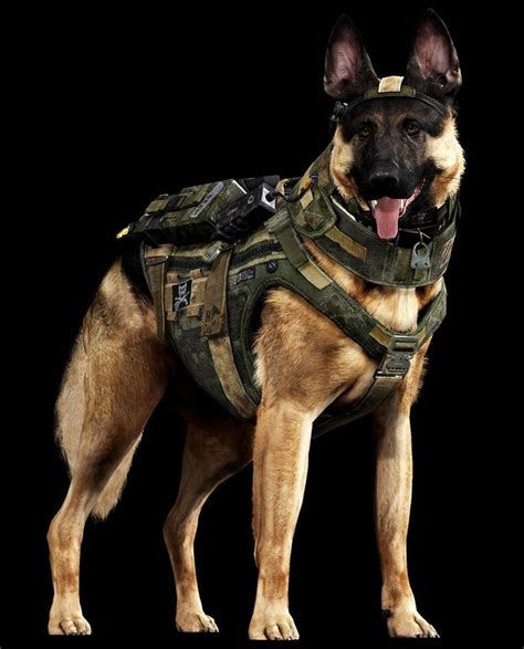 army dogs war dogs americans once forgotten heroes catholic stewards of creation